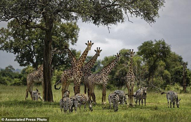 هشدار سازمان ملل درباره نابودی 1 میلیون گونه جانوری گیاهی در دنیا